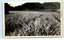 *Pineapple Patch Farm Field Puerto Rico RPPC Vintage Real Photo Postcard C42