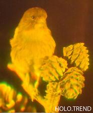Hologrammbild, 3D,  Hologramm Holographie  Kanarienvogel Vogel Tier Wildlife