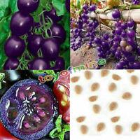 Hot Garden 20 Samen Lila Kirschtomate Bio Heirloom Obst Gemüse Pflanzen