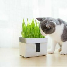 Pet Cat Grass Soilless Culture Growing Kit Cats Stomach Planter Hairball W6T2