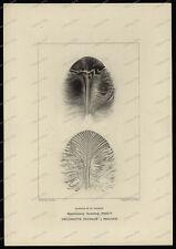- presión acero clave-engraving-John Ruskin-schools of St George-todos los & co-16