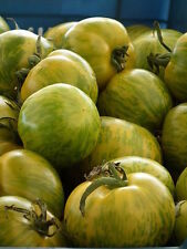 """50 GREEN ZEBRA TOMATO Striped 2"""" Lycopersicon Fruit Vegetable Seeds *Combind S/H"""