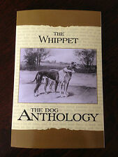 whippets dogs whippet racing breeding hounds hares lurchers champions