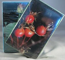 Plant Cards Emergency Survival Food Supply Emergency Prepper Bug Out Gear Shtf
