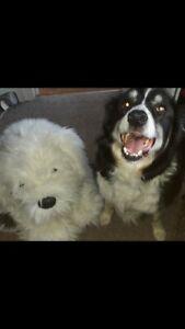 "Dulux Dog Official 26"" Sitting Lifesize Dog Plush Lovely Condition Blue Collar"