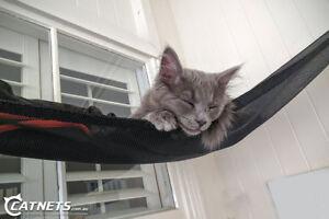 Outdoor Cat Hammock Kit - Free Shipping