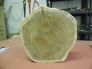 Baumscheibe, Holzscheibe, 45 x 10 cm, Eiche,geschliffen