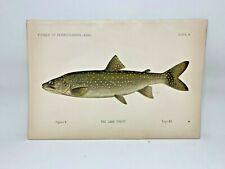 Scarce First Denton Fish Print - 1889 - Lake Trout - Original