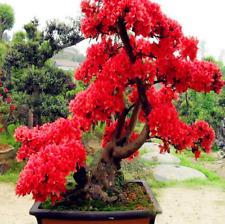 Red Japanese Cherry Blossoms Garden Bonsai Tree Small Sakura New S 10 Pcs Seeds