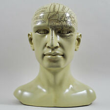 Large Phrenology Head Human Skull Vintage Style Design Statue Sculpture 01720