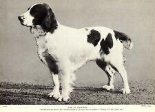 1930s Antique Springer Spaniel Dog Print Champion Lass of Tolworth Photo 3280-H