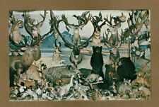 Spring Valley,Mn Minnesota,H & H Wildlife Mobile Museum, with black bears