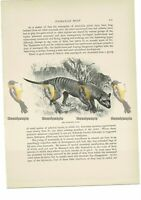 Tasmanian Wolf, Book Illustration (Print) , c1916