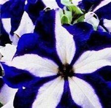 Petunia - Ultra Blue Star - 30 Seeds