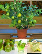 20pcs/bag kaffir lime seeds, lime seeds, (Citrus aurantifolia) ,organic fruit se