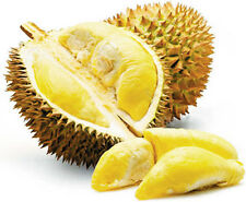 3 fresh tropical exotic DURIAN tree/plant/fruit seeds from Asia