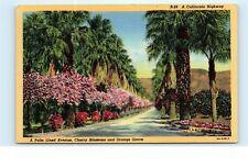 *Palm Lined Avenue Cherry Blossoms Orange Grove California Highway Postcard A47