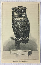 small 1887 magazine engraving ~ Mottled Owl, Mounted