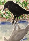Original ACEO Painting Crow Black Bird Miniature Card Art By Carole Collins