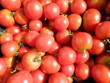 20 graines tomate precoce de quimper BIO semences paysannes origine Pascal Poot
