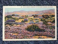 1935 Wild Flowers (Verbenas) On The Desert in Winter, California Postcard