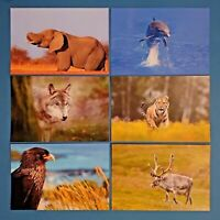 Set of 6 NEW Animal Wildlife Postcards, Bird, Elephant, Dolphin, Tiger, Wolf