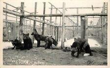 1940s Silver Foxes Yukon Canada RPPC Real photo postcard 865