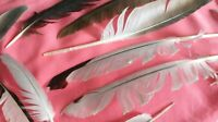 NATURAL FEATHERS 23pc FREE FALLEN SEAGULL+ PIGEON , Toys 4 CATS  feathers UK