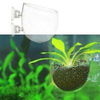 Großer Kristallglas Pflanze Schalen Roter Garnele Aquarium FishTank Sauger Q6A1
