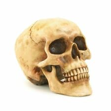 - NEW - Gifts & Decor Grinning Realistic Replica Human Skull Home Statue