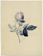 Antique Drawing-ROSE-STEM-LEAF-De Lance-1890