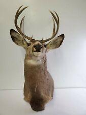 Large 9 Point Taxidermy Buck Deer Head Antlers Wall Hanging