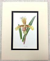 1913 Antico Botanico Stampa da Donna Pantofola Orchid Fiore Pianta Giallo Rosa