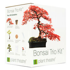 Bonsai 3 Tree Seed Starter Growing Kit Silver Birch Maple Mountain Plant Gift