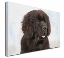 More details for newfoundland dog x-large 30