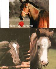 3 Pferdepostkarten Pferd Polen horse postcard cheval carte postale caballo paard