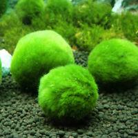 Riesige Marimo Moos Ball Cladophora Live Aquarium Pflanzen Fisch Aquarium Decor