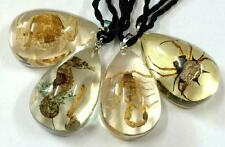 4 pcs vintage style lucid drop real scorpion spider crab insect pendant