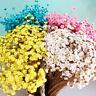 30 x Klein Daisy Getrocknete Blumen Zuhause Hochzeit Geburtstag Party Dekoration