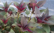 Amaranth Red Garnet - Delicious Leafy Spinach - 100 Seeds