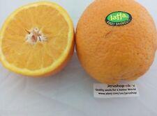 25 Fresh Seeds Israeli Jaffa Orange Citrus Sinensis Sweet Fruit Israel Tree תפוז