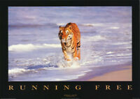 POSTER :ANIMAL: RUNNING FREE - TIGER IN WATER - FREE SHIPPING ! #PE1066  RBW1 S
