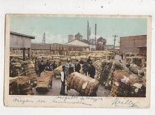 Weighing Cotton USA 1906 U/B Postcard 954a