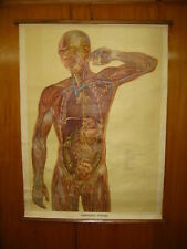 ANTIQUE UK HUMAN BODY LYMPHATIC SYSTEM CANVAS SCHOOL MAP MAPPA CARTE KARTE 1957