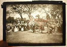 Placa foto Egipto El Cairo Mercado camello El Cairo Camel mercado Egipto c 1920