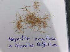 NEPENTHES ampullaria x nepenthes raffesiana 15 units seeds Fresh
