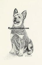 ART PRINT, AUSTRALIAN CATTLE DOG Blue Red Heeler drawing picture painting