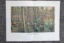 Alisos procedentes del Grunewald en Berlín impresión en color de 1911 ciervos corzos