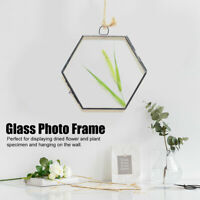 Geometric Hanging Glass Display Frame for Dried Flower Picture Plant Specimen