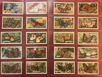 1938 GALLAHER-BUTTERFLIES & MOTHS-TOBACCO CARDS-COMPLETE 48 CARD SET-MINT-WOW